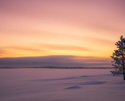arbre seul dans la neige