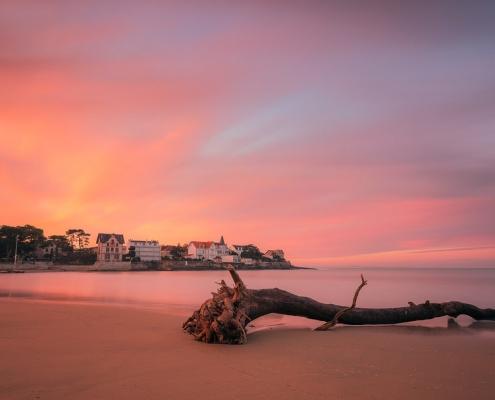 tronc d'arbre sur la plage du bureau